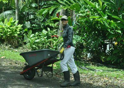 CF_Gardening